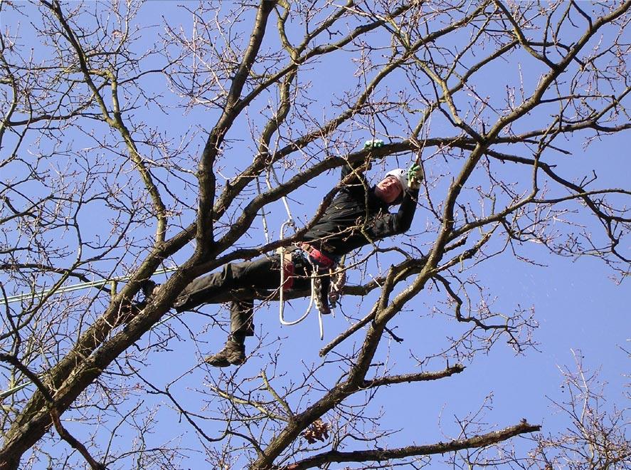 Baumpflege  Zweigwerk Baumpflege Helmut Schwengels | Pflegearbeiten